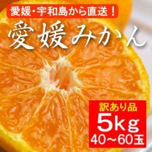 不揃い 訳あり・愛媛産みかん 5kg(約40〜60玉)|bishokuc