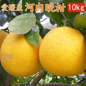 愛媛産・河内晩柑(美生柑)10kgご自宅用