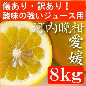 愛媛産・河内晩柑(美生柑)8kg 傷あり酸味の強いジュース用