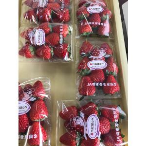 いちご食べくらべセット T-berry Farmの大粒いちご2パック(東近江)|biwacoi