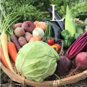 びわ湖が恋する野菜たち 環境負荷の少ない農法 野菜ボックス|biwacoi