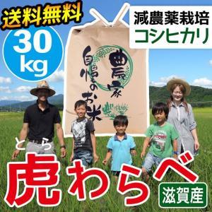 2020年度 米 お米 30kg コシヒカリ 虎わらべ 滋賀県産 白米 玄米 ファーム虎姫 送料無料 滋賀の幸|biwaoumi