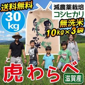 2020年度 米 お米 30kg 10kg×3袋 コシヒカリ 虎わらべ 滋賀県産 白米 玄米 ファーム虎姫 送料無料 滋賀の幸|biwaoumi