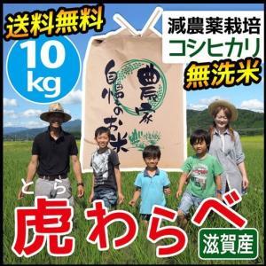2020年度 米 お米 10kg コシヒカリ 虎わらべ 滋賀県産 白米 玄米 ファーム虎姫 送料無料 滋賀の幸|biwaoumi
