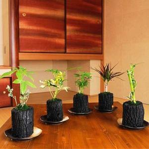 炭花壇 観葉植物 5種セット【大】 ※陶器皿付き 送料無料 biz-hana