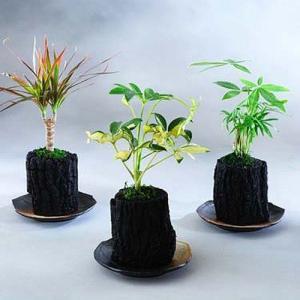 炭花壇 観葉植物 3種セット【ミニ】 ※陶器皿付き biz-hana