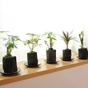炭花壇 観葉植物 5種セット【ミニ】 ※陶器皿付き 送料無料 biz-hana