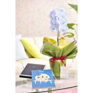 花とギフトのセット 選べる花色のカラー胡蝶蘭 彩 - irodori - 1本立(寒色系)とカタログギフト(ミストラル/マロウ)|biz-hana