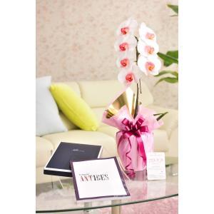 花とギフトのセット 選べる花色のカラー胡蝶蘭 彩 - irodori - 1本立(暖色系)とカタログギフト(ミストラル/アンティーブ)|biz-hana
