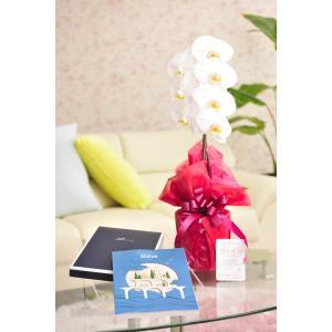 花とギフトのセット 胡蝶蘭 大輪1本立とカタログギフト(ミストラル/マロウ)|biz-hana