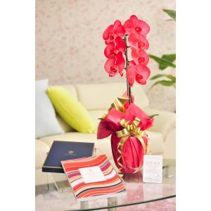 花とギフトのセット 選べる花色のカラー胡蝶蘭 彩 - irodori - 1本立(暖色系)とカタログギフト(ヴァンウェスト/ル−ジュ) biz-hana