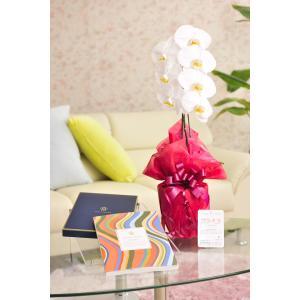 花とギフトのセット 胡蝶蘭 大輪1本立とカタログギフト(ヴァンウェスト/オランジュ) biz-hana