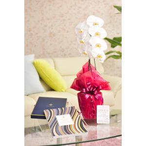 花とギフトのセット 胡蝶蘭 大輪1本立とカタログギフト(ヴァンウェスト/アルドワーズ) biz-hana