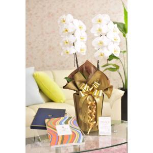 花とギフトのセット 胡蝶蘭 大輪2本立とカタログギフト(ヴァンウェスト/オランジュ) biz-hana