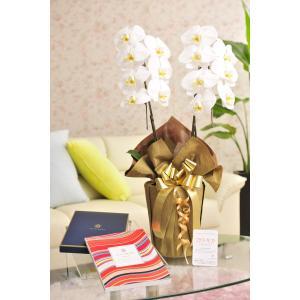 花とギフトのセット 胡蝶蘭 大輪2本立とカタログギフト(ヴァンウェスト/ルージュ) biz-hana