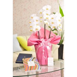 花とギフトのセット 胡蝶蘭 大輪3本立とカタログギフト(ヴァンウェスト/オランジュ) biz-hana