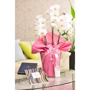 花とギフトのセット 胡蝶蘭 大輪3本立とカタログギフト(ヴァンウェスト/アルドワーズ) biz-hana