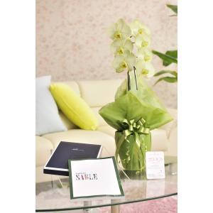 花とギフトのセット 選べる花色のカラー胡蝶蘭 彩 - irodori - 1本立(寒色系)とカタログギフト(ミストラル/セーブル) biz-hana