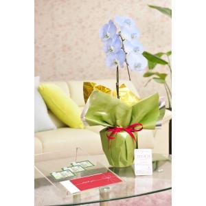 花とギフトのセット 選べる花色のカラー胡蝶蘭 彩 - irodori - 1本立(寒色系)と商品券(図書カード3000円)【送料・カード・ラッピング無料】|biz-hana
