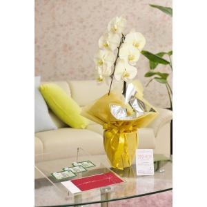 花とギフトのセット 選べる花色のカラー胡蝶蘭 彩 - irodori - 1本立(暖色系)と商品券(図書カード3000円)【送料・カード・ラッピング無料】|biz-hana