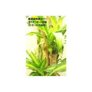 観葉植物鉢カバー ラスターポット biz-hana