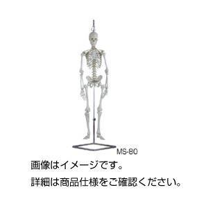 <title>人体骨格模型 MS-80 半額</title>