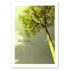 インテリアアートポスター 『Bel Arbre』 A3サイズ フォト 自然 風景 Interior Art Poster|blankwall