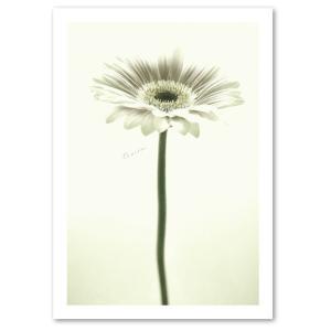 ポスター A3サイズ 『Camille』 インテリア フォト 花,植物 おしゃれ モノクロ|blankwall
