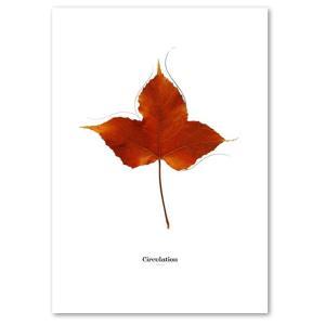 ポスター A3サイズ 『Circulation-a』 インテリア フォト 花,植物 おしゃれポスター Interior Art Poster|blankwall