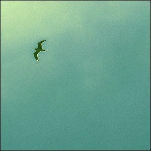 インテリアポスター A2サイズ 『Espoir』 フォト 自然 海鳥 人気 おしゃれポスター Interior Art Poster|blankwall|02