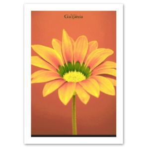 ポスター A3サイズ 『Gazania』 インテリア/フォト/花,植物 おしゃれポスター/Interior Art Poster|blankwall