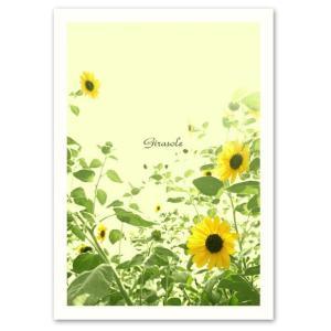 ポスター A3サイズ 『Girasole』 ひまわり/フォト/花,植物ポスター/人気/Interior Art Poster|blankwall