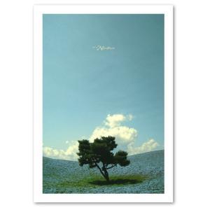 インテリアポスター A3サイズ 『Nemophila』 フォト 風景 ネモフィラ おしゃれ ポスター Interior Art Poster blankwall