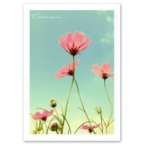 ポスター A2サイズ 『Opacare-b』 インテリア フォト 花,植物 ポスター Interior Art Poster blankwall