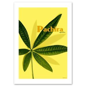 ポスター A3サイズ 『Pachira』 おしゃれ フォト 人気 花,植物 ポスター Interior Art Poster|blankwall