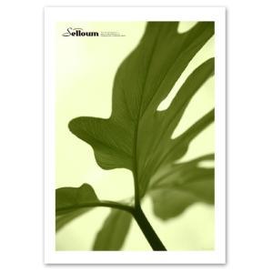 ポスター A3サイズ 『Selloum-b』 インテリア フォト 花,植物 ポスター Interior Art Poster|blankwall