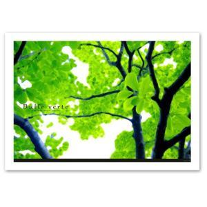 ポスター A2サイズ 『Bulle verte』 インテリア フォト 花,植物 Interior Art Poster|blankwall