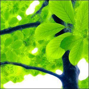 ポスター A2サイズ 『Bulle verte』 インテリア フォト 花,植物 Interior Art Poster|blankwall|03