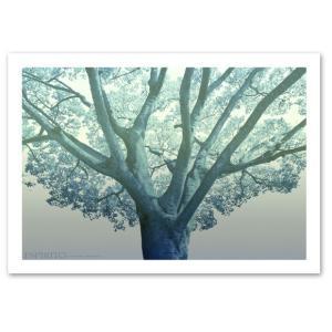 アートポスター A3サイズ 『Espirito-as』 フォト 花,植物 Interior Art Poster|blankwall