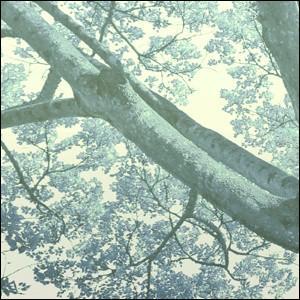 アートポスター A3サイズ 『Espirito-as』 フォト 花,植物 Interior Art Poster|blankwall|02