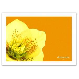 ポスター A3サイズ 『Orientalis 横タイプ』 インテリア/フォト/花,植物ポスター/ Interior Art Poster|blankwall