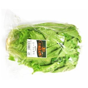 【フルヤの有機野菜】有機リーフレタス 1株 冷蔵|blife