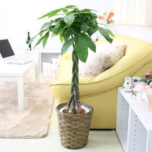 観葉植物 パキラ 7号鉢+バスケット鉢カバー