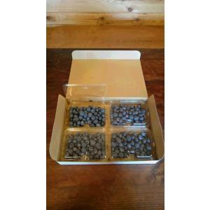ブルーベリー生果1kg Mサイズ|blueberry-imakino