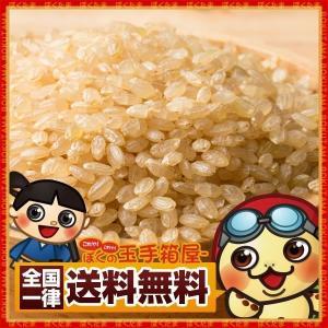 玄米 国産 発芽玄米 500g 玄米 送料無料|bokunotamatebakoya