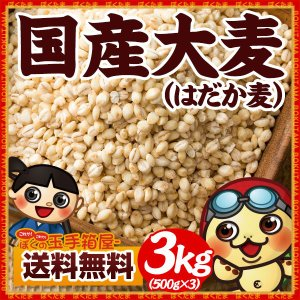 大麦 国産 はだか麦 3kg(500gx6)[裸麦 雑穀 丸麦 麦飯 ヘルシー 穀物 大麦β-グルカン] 送料無料|bokunotamatebakoya