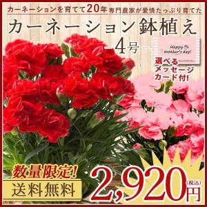 母の日 ギフト 花 プレゼント カーネーション 鉢植え 4号 選べるメッセージ付 [赤/ピンク] [ 母の日 ギフト 贈り物 ] ※受付締め切り:5/7(月)まで|bokunotamatebakoya