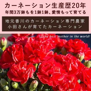 母の日 ギフト 花 プレゼント カーネーション 鉢植え 4号 選べるメッセージ付 [赤/ピンク] [ 母の日 ギフト 贈り物 ] ※受付締め切り:5/7(月)まで|bokunotamatebakoya|03