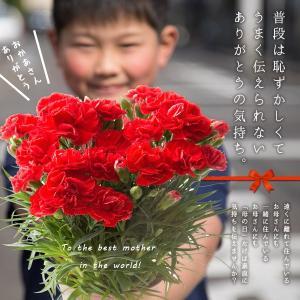 母の日 ギフト 花 プレゼント カーネーション 鉢植え 4号 選べるメッセージ付 [赤/ピンク] [ 母の日 ギフト 贈り物 ] ※受付締め切り:5/7(月)まで|bokunotamatebakoya|04