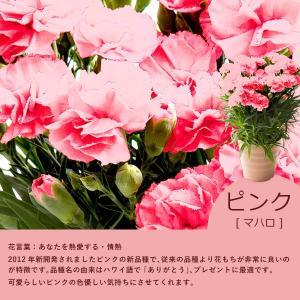 母の日 ギフト 花 プレゼント カーネーション 鉢植え 4号 選べるメッセージ付 [赤/ピンク] [ 母の日 ギフト 贈り物 ] ※受付締め切り:5/7(月)まで|bokunotamatebakoya|08